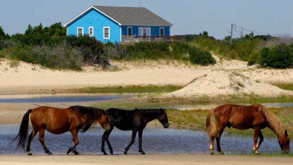 Corolla (North Carolina), riserva di cavalli allo stato brado #fotospettacolari