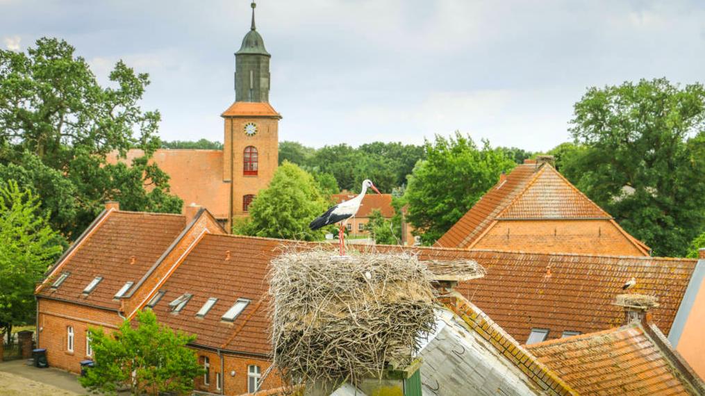 Escursioni da Berlino: Rühstädt, il villaggio delle cicogne